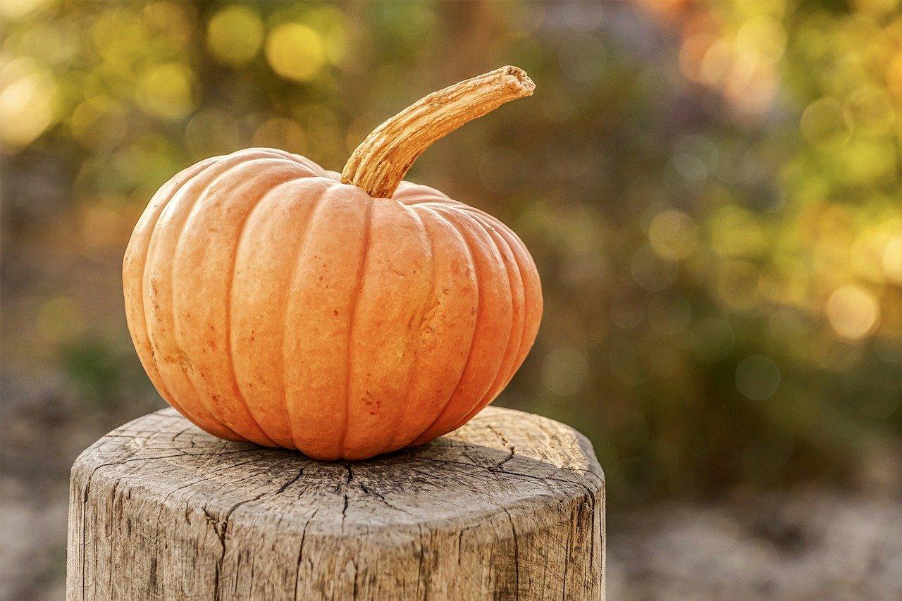 pumpkin, autumn, harvest-4454745.jpg